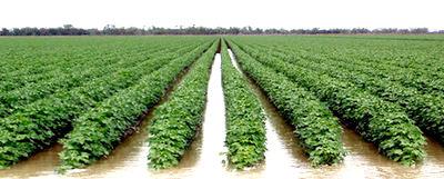 Image result for Surface Irrigation System